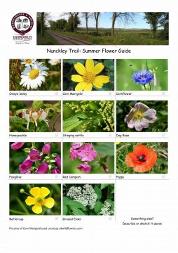 Summer Flowers Guide